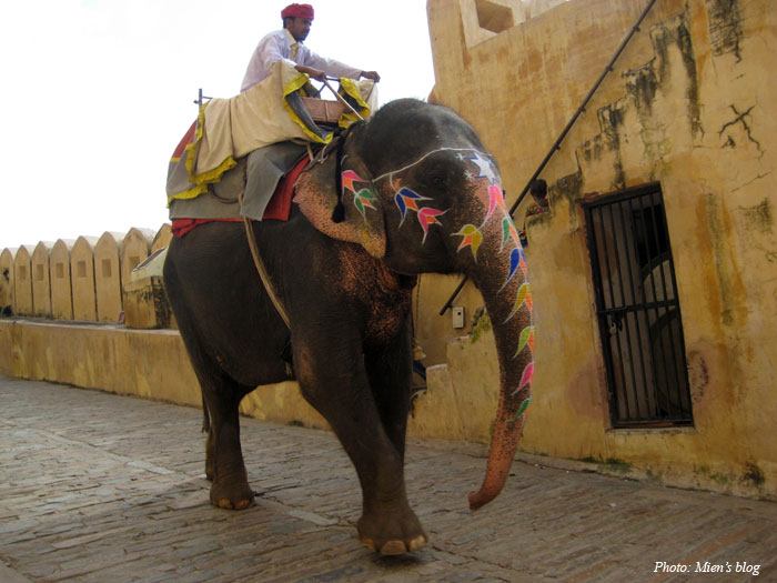 amber-fort-6