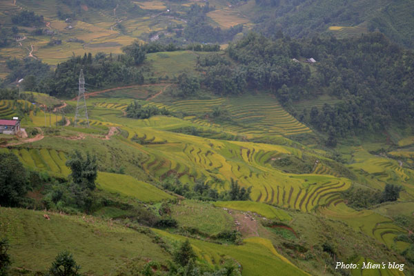 The famous terrace field in Sapa