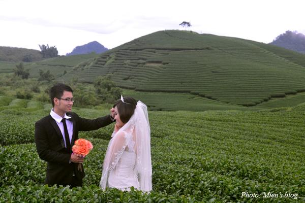Moc-Chau-Tea-Plant-3