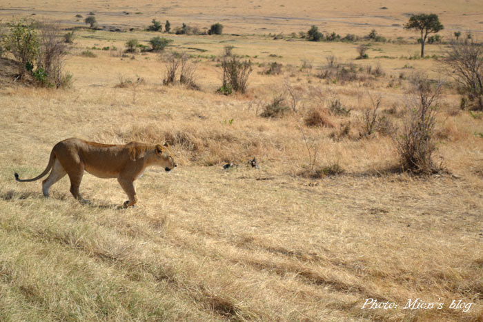 kenya-mien-blog-safari-1